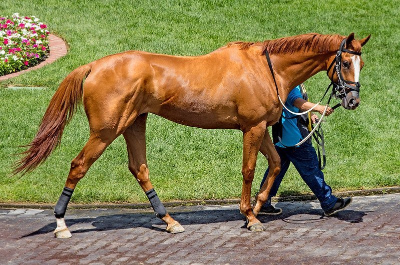 How to tell if a racehorse is fit