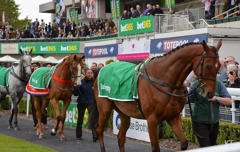 Imperial Cup Preview Sandown Park